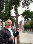 Liège : Henri II et un gingko biloba