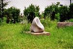 buddhas ohr; kalkstein
