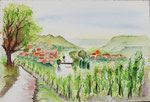 Weinberge am Main - Aquarell 38x56