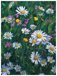 """""""Blumenwiese"""" 40 x 30 cm"""