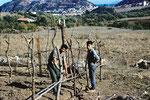 Plantation des premiers piquets