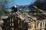 Utilisation de croûtes de bois achetées à la scierie de Collo