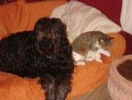 Manchmal muss ich mir das Sofa mit Cookie teilen