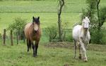 Links Stone und rechts weisses Pferd ( denke ein Araber ? )
