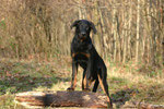 Eyco ( Photoshooting with Vannessa Grossemy Beauceron Calender 2007)
