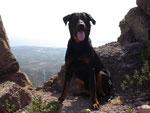 In den Bergen ist es zwar kühler trotzdem Hundemüde