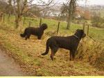 Wir dürfen frei laufen beim Spaziergang...und Tiere auf der Weide beobachten..