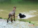 Mama war in Berlin und Liane mein Hundesitter brachte Freunde mit..
