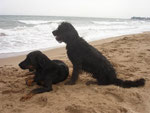 Eyco und Leeloo am Strand