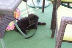 Newt lag ganz brav unterm Tisch wärend wir früchtückten