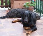 Leeloo&Eyco auf unserer Terrasse