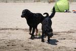 Leeloo & Eyco  am Strand im HIntergrund unser Strandzelt in Fereinsfarben ;-)