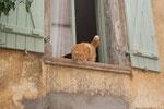 Eine Beobachterin.........
