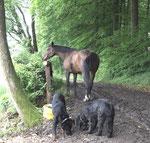 Die Hunde suchen nach den Resten
