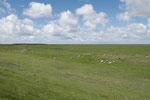 De l'autre le royaume des moutons