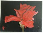 ROSE - Acrylbild auf Leinwand / Keilrahmen - 40 x 30 cm - April 2016