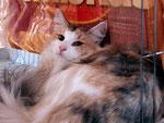 Bella in ihrem Ausstellungskäfig