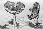 Mushrooms 1, 2016, graphit pen on paper, 21 x 29,7 cm