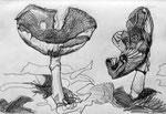 Pilze 1, 2016, Graphitstift auf Papier, DIN A 4