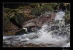 © Objectif Loutres - Stéphane Raimond - La loutre d'Europe dans son environnement naturel