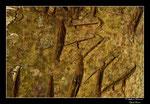 Objectif Loutres - Stéphane Raimond - Griffures d'ours ( Pyrénées Orientales )