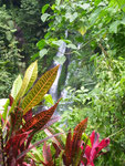 Pflanzen bei Aling Aling
