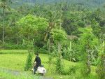 Unterwegs: rund um Panji