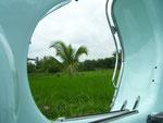 Mein Lieblingsbild: Unterwegs: rund um Panji