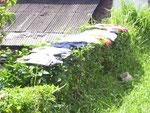 Wäsche trocknet auf Büschen am Straßenrand