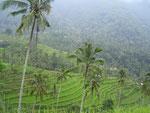 Reisterrassen in den Bergen
