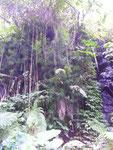 Eindrücke vom Weg zu Aling Aling