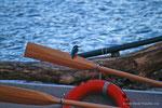 Martin pescatore (Alcedo atthis) l'originale :-)