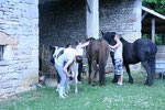 Pensage de chevaux