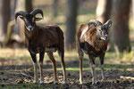 "Naturwildpark Granat - ""Doppelbock"""