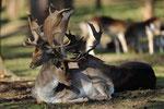 Naturwildpark Granat - Hirsche