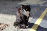Katze in Kirkwall