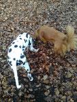 Mokusch und ich beim Mäuse suchen