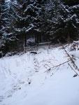 ... dann hinein in den Bergwald ...