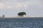 """""""Makabre"""" Baumgruppe, lange schon sichtbar, wenn man die Schlei ansteuert."""