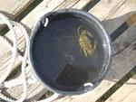 Krebse angeln. Der erfolgreiche Fang im Eimer