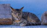Greek Cats No.3