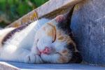 Greek Cats No. 2