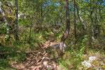 Bois du Paiolive