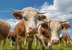 Zwei Pfälzer Cow-Boys