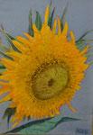 Sonnenblume, Öl auf Holz 20 x 30 cm.