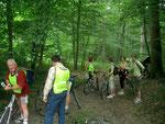 arrêt en forêt