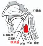 喉頭蓋の位置
