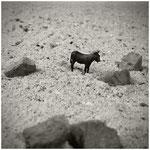een ezel stoot zich nooit...