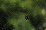 de identiteitscrisis van spiderman