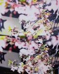 「さくらさくら〜うららかな目眩Ⅱ〜」/40F/ アクリル、パネル、綿布